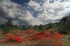 Carso (Elmac_ off) Tags: autunno trieste carso dintorni blueribbonwinner sommacco