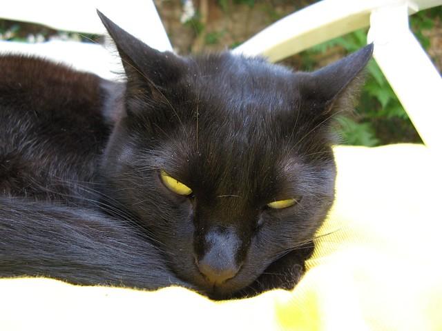 Catsita