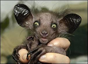 Los animales mas raros del mundo megapost   entra... info