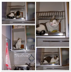 Fusillo in the dish drainer (*DaniGanz*) Tags: white cute home kitchen cat catwomen casa fdsflickrtoys mosaic tabby tiger kitty photomosaic mosaico gatto bianco flickrtoys kittie cucina micio fusillo dishdrainer tigrato daniganz scolapiatti