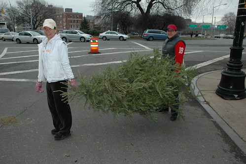 Bringing the Tree