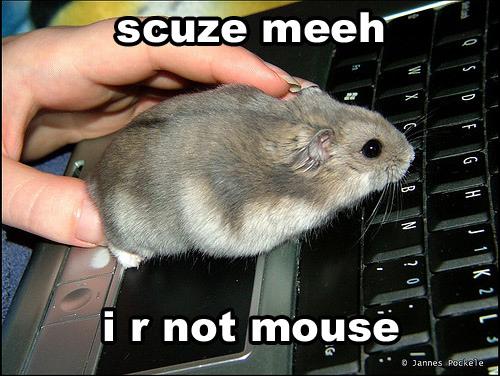 lol cat mouse