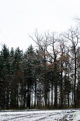 ryoku_de_5617 (ashesmonroe) Tags: wood november schnee trees winter wild sky detail nature leaves forest germany deutschland herbst wald buchwald badenwürttemberg canonef50mmf18ii hohenlohe badenwrttemberg eckartshausen ilshofen landkreisschwäbischhall landkreisschw¦bischhall