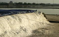 20071230_02248 (Peter Sealy Art & Photography) Tags: thailand farm salt samutprakan