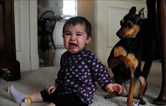The guilty ones (UrbanDorothy) Tags: baby sadness infant elise crying daughter expressions anger ellie screaming emotions miniaturepinscher minpin shocked mislead astonished aback maycee