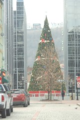 Christmas tree in Pittsburgh, PA