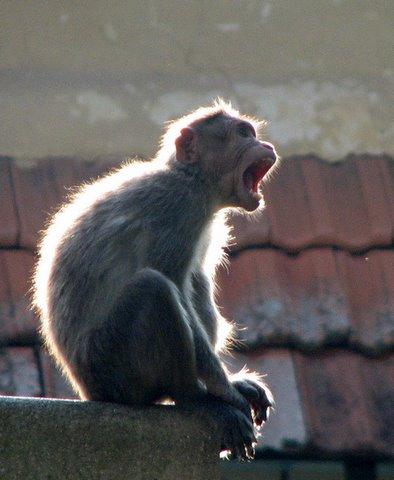 the yawn devarayanadurga 050408