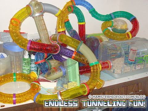 Endless Tunneling Fun for the hamster