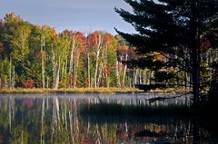 Council Lake Sunrise (baldwinm16) Tags: morning autumn trees lake fall water fog sunrise fallcolor michigan birch upperpeninsula autumncolor waterreflections hiawathanationalforest reflecitons councillake