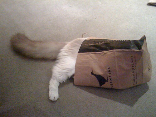 cat in bag by ginmartini.