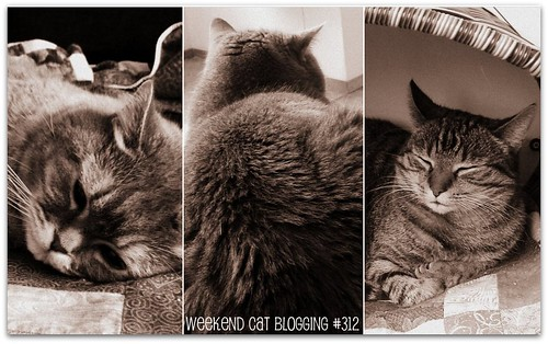 Weekend Cat Blogging #312