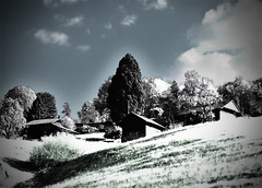 Hotspot (Sibilus_Basilea) Tags: lake alps colour schweiz switzerland infrared thun bern colourful alpen farbe berne farbig berner interlaken hotspot thunersee oberland infrarot faulensee kraftort benrese