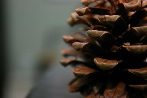 pine cones009