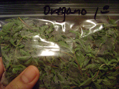 oregano possession