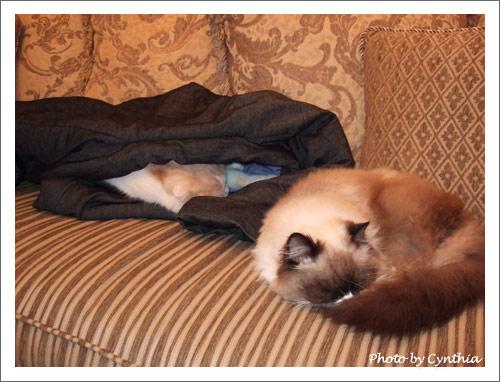 Biru和Mori一起睡