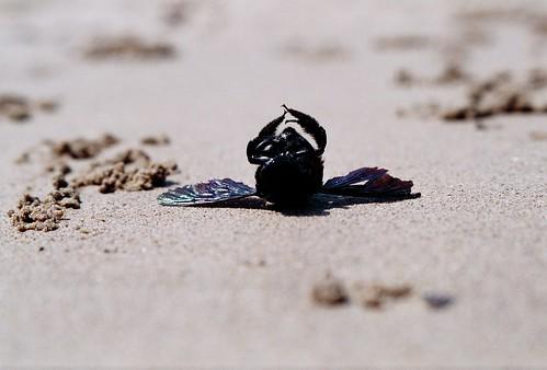 dead beetle_2.jpg