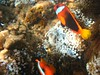 Morning snorkel - Nemos