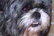 Kinship Circle - 2008-04-12 - Still Healing, One Animal At A Time 09