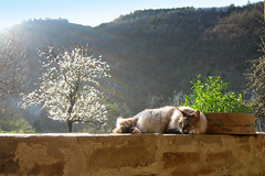 Sun is life! (Xena*best friend*) Tags: italy pet cats fur chats furry feline kitty kittens piemonte gato davide gatto katzen feral blueribbonwinner 12yearsold canondigitalixus50 beautifulcapture kissablekat piedmontitaly bestofcats kittycrown goldstaraward furrycatfriend sunislife
