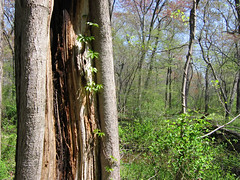 """""""Ok, turn right at this tree... (Messy Empress) Tags: nature forest woods letterboxing letterbox"""