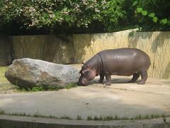 Inside the Prague Zoo