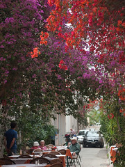 Flower Draped Street (David R. Crowe) Tags: orange plant flower colour history nature europe purple places greece caryophyllaceae angiosperms angiosperm greekhistory
