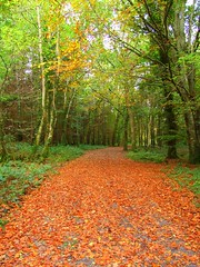 Beautiful (magnum_lady) Tags: wood autumn trees ireland fall nature beautiful leaves forest song scenic eire fungi sligo marillion hazelwood wbyeats wonderfulworld