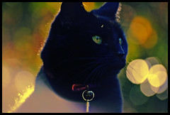 Bewitched - Magical light and a black cat (s0ulsurfing) Tags: lighting autumn light orange sunlight blur colour green halloween backlight cat wow blackcat focus glow dof bright bokeh trickortreat boo cropped backlit autumnal 2007 clours october31st s0ulsurfing abigfave thisisgorgeous allhallowedeve
