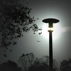 Sun-Ray Lamp. (jimbodownie) Tags: street trees sun bird lamp edinburgh bright sunny newtown monochromia hourofthediamondlight