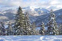 Tannen und der Rofan (bookhouse boy) Tags: christmas schnee winter snow ski alps weihnachten austria skiing card alpen weihnachtskarte tyrol skifahren christmascard achenkirch achensee christlum impressedbeauty 17november2007