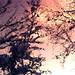 Freedom from my Wild River!!! :))) / De ma rivière sauvage… la liberté!!! :))) - by Denis Collette...!!!