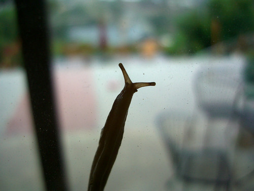 Little slug friend
