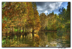 The Local Pond (KayCpics) Tags: trees nature tampabay cypress soe hdr artisticexpression supershot theexhibit aplusphoto diamondclassphotographer kaycpics theunforgettablepictures betterthangood goldstaraward