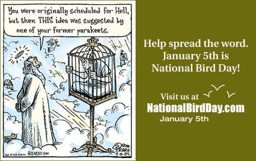 National Bird Day - bizarro-card-1