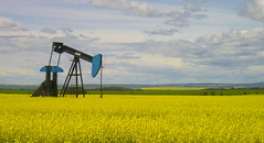 Oil of all kinds... (Kelly - McLaughlin) Tags: blue sky yellow rural landscape bluesky alberta oil bigsky grasshopper prairie oilfield bearlake pumpjack pumper clairmont peacecountry canolafields grandepraire countyofgrandeprairie