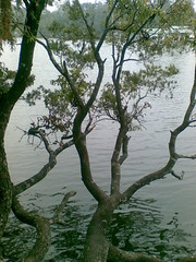 Hey Its mine (amudhamta_vinumka) Tags: flowers lake tree nature water peace augustus amudha