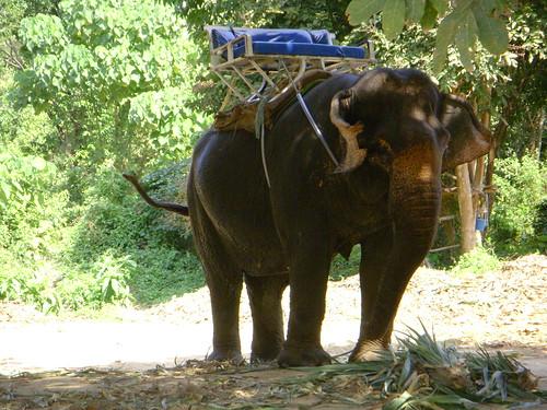 Elefantito tailandes