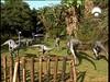 56 Ornithomimus paddock-53992