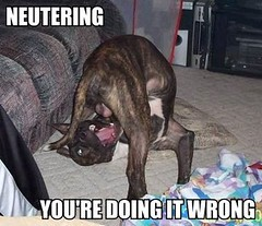 You're Doing It Wrong-Neutering (ScribbleCraft) Tags: dogs lol biting macros testicles neutering roflbot
