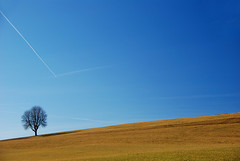 """The return of The Tree - February 08"" (helmet13) Tags: nature tree d80 blue sky grassland landscape world100f 100faves vaportrail harmony silence singletree gettyimages heartaward simplicity"