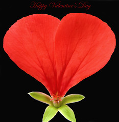 Happy Valentine's Day ... (Mary Trebilco) Tags: red photoshop petals heart or explore layers geranium 2008 valentinesday pelargonium onblack happyvalentinesday flowerotica camerafinder imneverquitesure