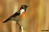 بريقش (N-S-S) Tags: bird birds nikon sigma 800mm طير ناصر d2xs طائر محمية بريقش الصليهم