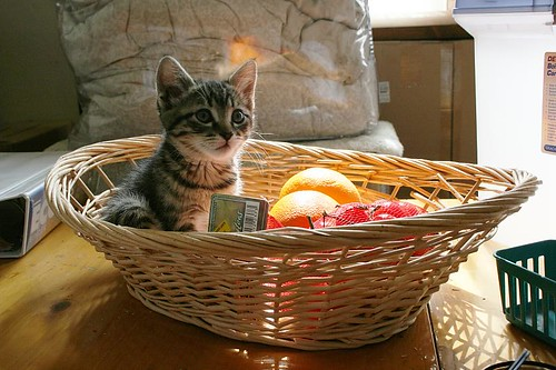 cute kitten sitting in fruit basket cat pic