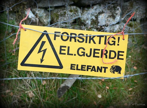 Elefantsafari 1