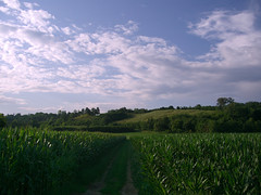 country lanes... (pinktigger) Tags: italy green landscape country hills lane friuli fagagna yourcountry
