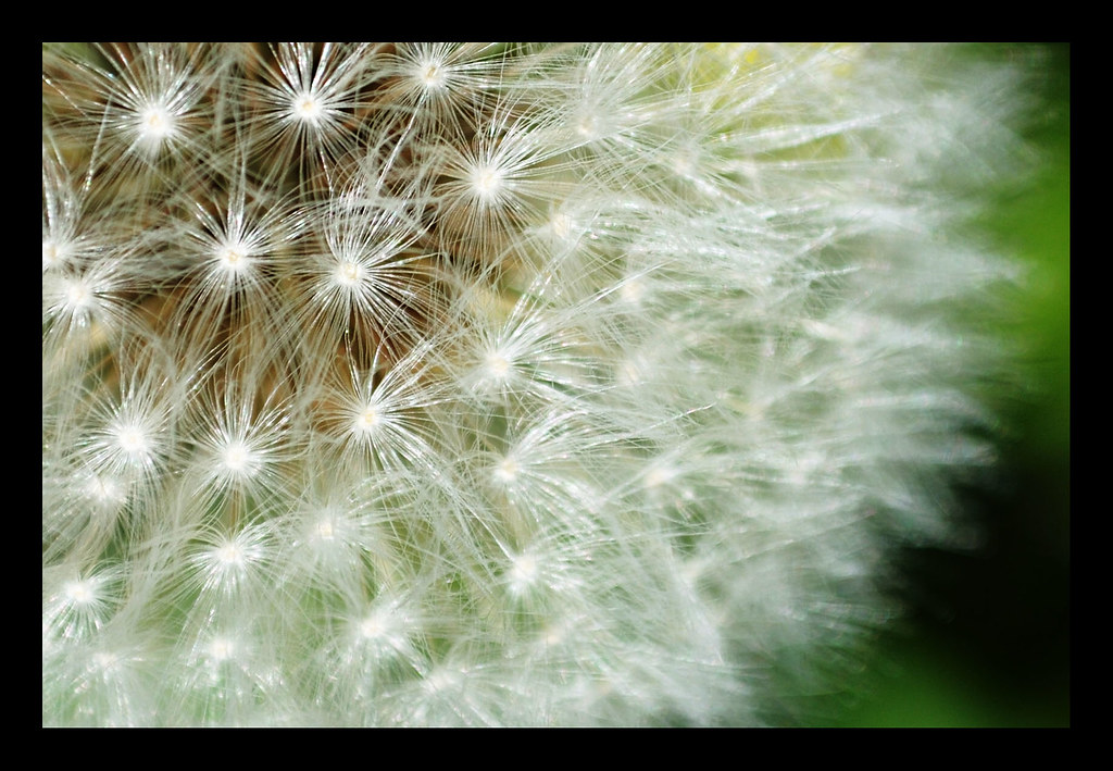 Dandy {April 9 2010}