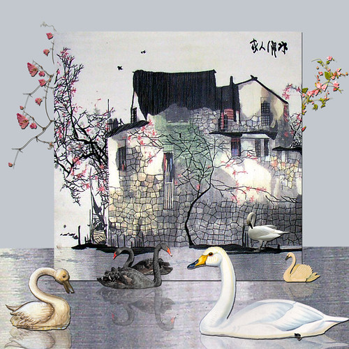 Oriental Swans