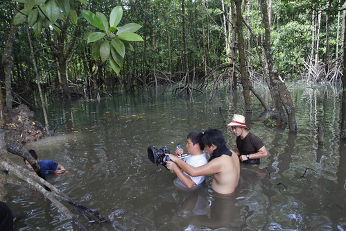 A scene in the mangrove forest