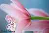 ORCHID (lollipoplollipop@home) Tags: macroflowerlovers nikonflickraward