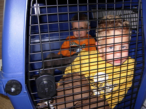 kids in a crate 4